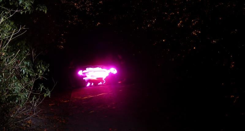 Mouton de lumière fuyant dans les bois